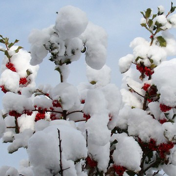Berry cute snowfall!