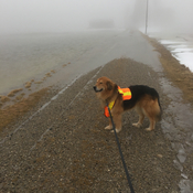 Foggy morning walk