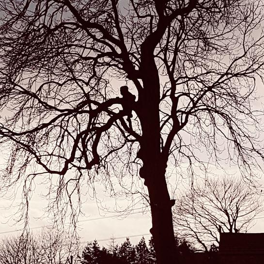 Ash tree anomaly Tideswell, UKF