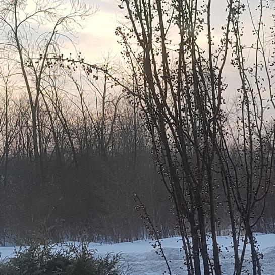 Un beau matin glacé! Montréal, QC