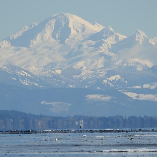 Eagle View Boundary Bay Regional Park, Delta, BC