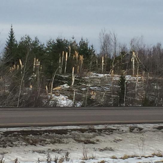 Tree Trimming outside Moncton NB Memramcook, New Brunswick, CA