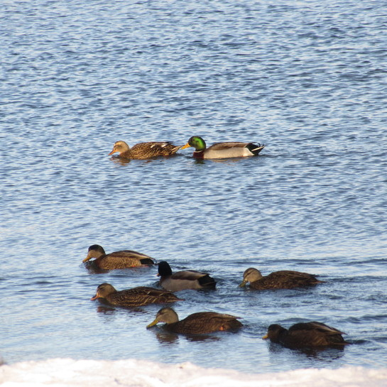 Lake in winter Quidi Vidi Lake Trail, St. John's, NL A1A 1K1, Canada