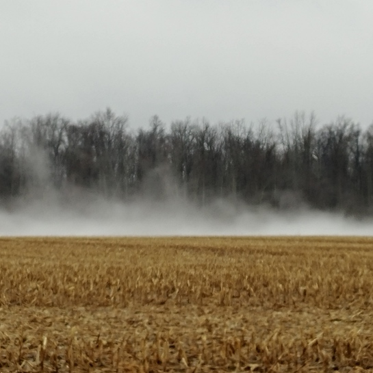 Whispy Fog Plympton-Wyoming, ON