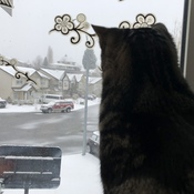 Kitten's Biggest Snowfall