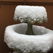 Snowy bird bath!