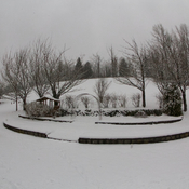 Today's snow in Langley, BC