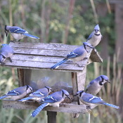 Blue Jays on deck for Spring Training