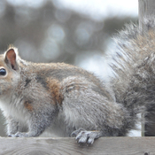 Cute baby squirrel