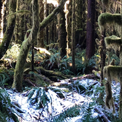 Enchanted Rainforest at Salmon Beach
