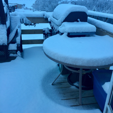 Overnight snowfall At Dollard Sask