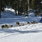 """DOG SLED TOURS"" LAKE LOUISE AB"