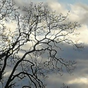 Bare branches and clouds