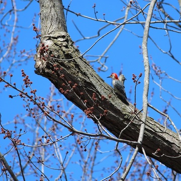 The buds are coming