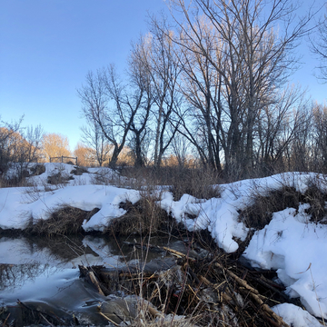 Spring has sprung in the river-bottom (beaver dam)