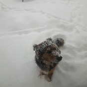 Snow doggie, he's not impressed!