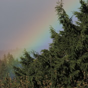 Rainbow in Colwood, BC