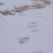 Snowy Walk Around Wetland!