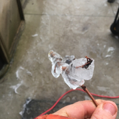 Ice wrapped branch piece