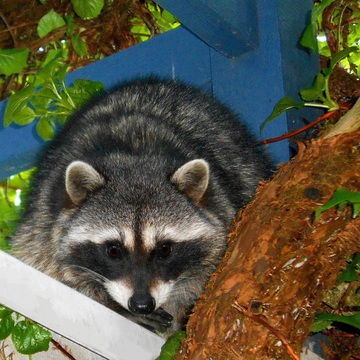 GARDEN VISITOR - WEST VANCOUVER - 7:00 PM