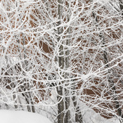 Frosted branches in Moosonee.