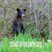 Stand Up For Earth