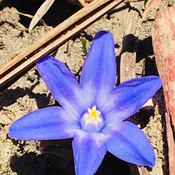 First flower in our garden