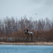 Moose at Cherry beach area