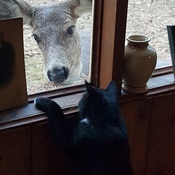 Cat Meets Deer