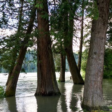 Waters ' rising Fraser River