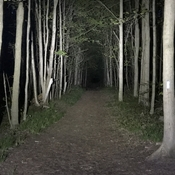 Forest walking at night