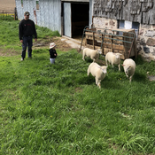 Day on the farm