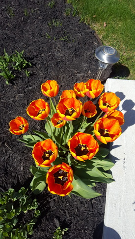 #beautifulflowers Brampton, ON