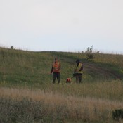 Hazing of Coyotes at Nose Hill Park. Hired by City.