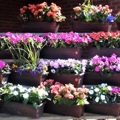 Outdoor Flower Market.