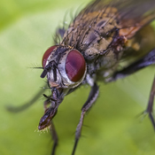 The Mouth of a Fly