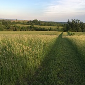 Path through the hay fields