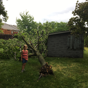 Virgil Niagara-on-the-Lake tree down from Monday's storm