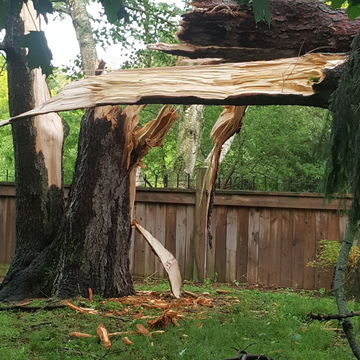 was this a tornado? this is just 1 of 3 huge trees that have totally covered my
