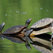 Map Turtles