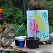 Red squirrel paints his first masterpiece!