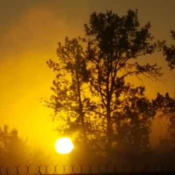 sunrise and fog