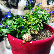 My cat and her snail