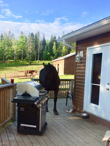 mya wanted to have a bbq this morning!! Salt Springs, Nova Scotia, CA