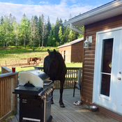 mya wanted to have a bbq this morning!!