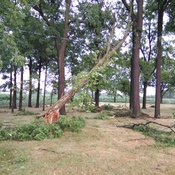 Tree Damage.