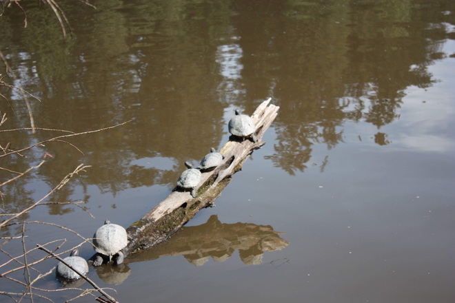 Image result for lost lagoon turtles