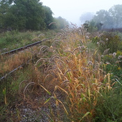 the old tracks of st.thomas on a foggy morn