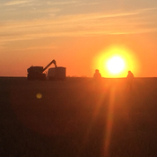 Harvest sunset