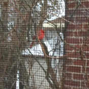 Cardinal doing his daily visit